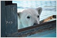 ほっきょくぐまのいちにち アイラ と他の動物 2017/04/30 - メタのマクロ視点な奇跡なんて白熊の為