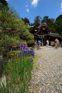 初夏の花めぐり 霧島躑躅@梅宮大社 - デジタルな鍛冶屋の写真歩記