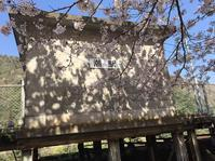 三江線・桜の駅めぐり - 堀治喜の「酔頓楼からの遠吠え3」