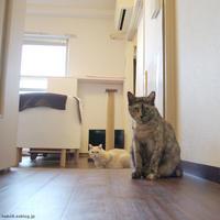 連休 - 賃貸ネコ暮らし|賃貸住宅でネコを室内飼いする工夫