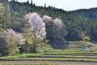 山桜がきれいな栗駒の里 - 栗駒山の里だより
