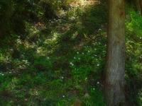 セツブンソウの次に咲くスプリング・エフェメラル - つれづれ日記