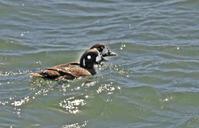 茨城の海 - barbersanの野鳥観察