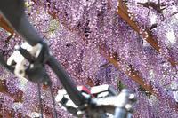 5月からジンワリ自転車通勤再開してみた - 空のむこうに ~自転車徒然 ほんのりと~
