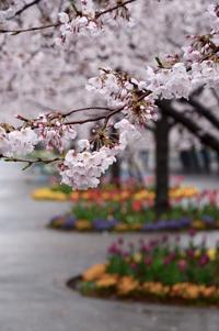 さくら広場 - at-blog*