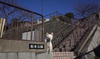 Vol.1177 松本公園 - 小太郎の白っぽい世界