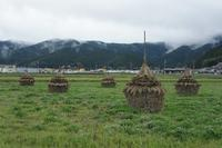 GW5/6(土)は田植え体験のため、お休みします - 民藝 かりん  Karin Folkcraft