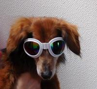 犬の紫外線ブロックサングラス - うまうまひんひん