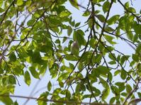 春を満喫 - 西多摩探鳥散歩