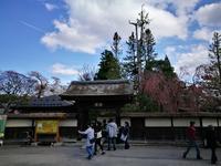 鶴ヶ城の桜4 @福島県会津若松市 - 963-7837