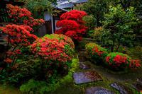 キリシマツツジ咲く正伝永源院 - 花景色-K.W.C. PhotoBlog