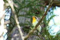 いろんな野鳥♪ - happy-cafe*vol.2