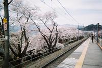 桜の旅【21】 - 写真の記憶