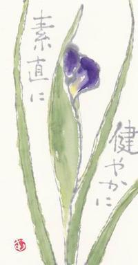 あやめ 「健やかに 素直に」 - ムッチャンの絵手紙日記