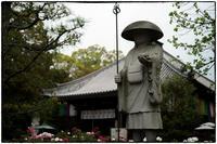 牡丹の寺-3 - Hare's Photolog