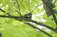 マミジロ未遂事件 - 野鳥写真日記 自分用アーカイブズ