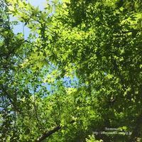新緑の時 - Awesome!