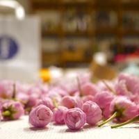 【歓】新しき隣人の歓迎ランチ会 de 桜ごはん。 - いつかきっと