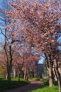 5月4日 今日の写真 - ainosatoブログ02