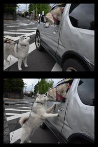なんと10年ぶりっ?! (^o^) - 犬連れへんろ*二人と一匹のはなし*