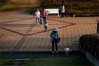 ※ 新潟県立近代美術館の屋上庭園 - 気まぐれ写真工房 new