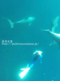 イルカと人と - 2017 御蔵島