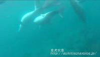命の営み - 2017 御蔵島