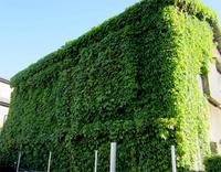 蔦に覆われた家 - のんびり街さんぽ
