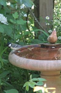 庭に遊びに来てくれる小鳥 ー シジュウカラとキジバト ー - まとまりの無い庭 excite版
