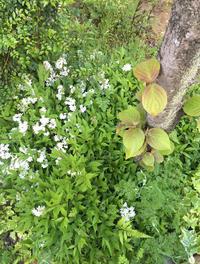 清瀬の春の庭 - kukka kukka