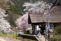 桜を求めて会津へ vol.1 - Mein Alltagsleben  〜カメラとおでかけ〜