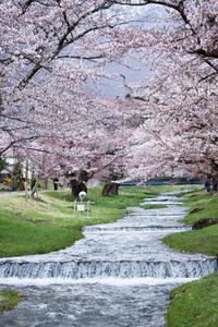 桜を求めて会津へ vol.2 - Mein Alltagsleben  〜カメラとおでかけ〜