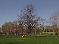 久しぶりの真駒内公園 - nshima.blog