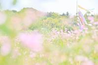 レンゲ畑と鯉のぼり - GreenLife