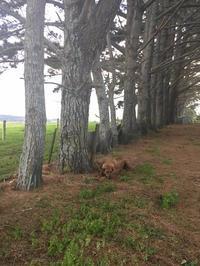 夕暮れの風景とほおずき/ Farm Views and Cape Gooseberry - アメリカからニュージーランドへ