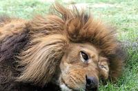 「キング」の目覚め - 動物園放浪記