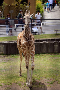 「リオ」と「サクラ」 - 動物園放浪記