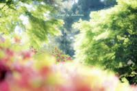 新緑とツツジ - Photographie de la couleur