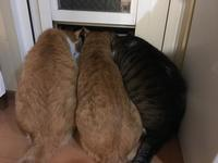 鬼嫁確定 - 「両手のない猫」チビタと愉快な仲間たち