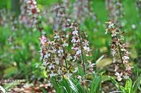 皇居東御苑の初夏の草花をウオッチング(^^♪ - 自然のキャンバス