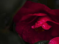 Flowers(4cut) 雨の日 -     ~風に乗って~    Present