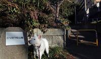 Vol.1178 三ツ沢下町公園 - 小太郎の白っぽい世界