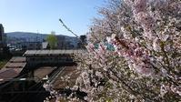 桜咲く - カメラと歩いてみたら