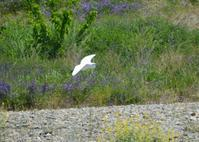 ピーカンの青空の下、浅川 - 西多摩探鳥散歩