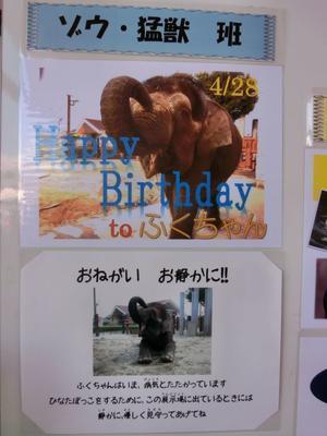 ふくちゃん、19歳の誕生日おめでとう! - ボルネオゾウのふくちゃん ~ふくちゃんへの恩返し~