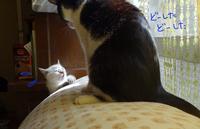 子猫が来た   生後2ヶ月の記録 - 糸巻きパレットガーデン