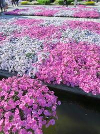 GWは花を見に<3> 花いっぱいのあしかがフラワーパーク  藤以外の花 - ニッキーののんびり気まま暮らし