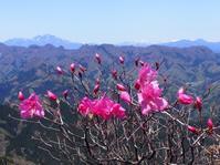 天狗岩~烏帽子岳アカヤシオ岩稜コースを楽しんで  2017.5.2(火) - 心のまま、足の向くまま・・・