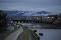 桜  2017 鴨川 四条大橋 - 写真部