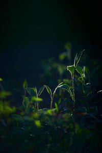 緑の息吹き - THE FL LENS WAKU WAKU Mark II
